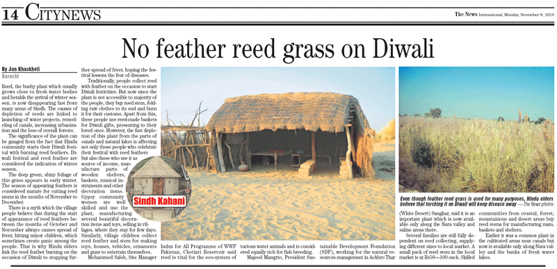 No feather reed Grass on Diwali